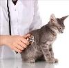 Ветеринарные клиники в Зыряновском